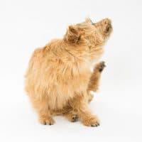 ペットから伝染する水虫が原因で薄毛に?!症状・原因・改善方法を徹底解説!