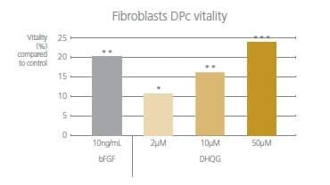 DHQGが繊維芽細胞に与える効果