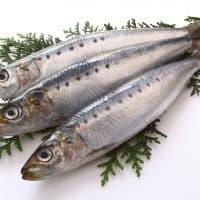 EPAを多く含む魚